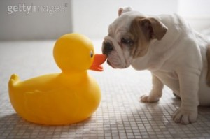 Rubber Duck Sniff Test